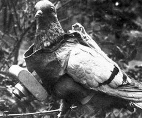 У Battlefield 1 остался только один секрет – голуби