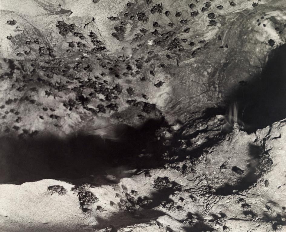 Хэллоуин еще некончился: лучшие фотографии летучих мышей отNatGeo - Изображение 2