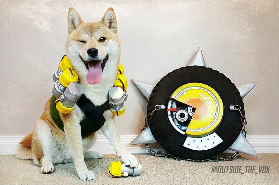 Сногсшибательный собакосплей Overwatch  - Изображение 2