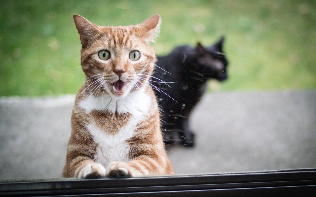 Инженер Nvidia борется с котами при помощи нейросети и поливалок - Изображение 1