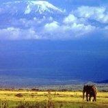 Скриншот Africa Jigsaw – Изображение 3