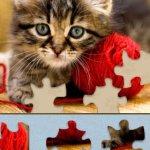 Скриншот Adorable Kitten Jigsaw Puzzle – Изображение 5
