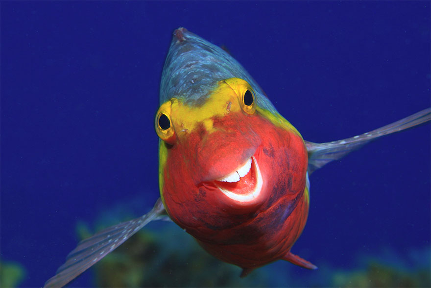 Позитивная галерея: 40 фото сконкурса насамый смешной снимок дикой природы   Канобу - Изображение 3965