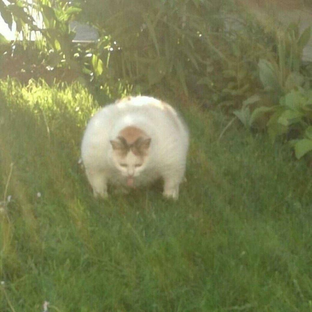 Ненависть, грусть, безысходность и коты. Вспоминаем самые забавные фотографии ко дню кошек!. - Изображение 28