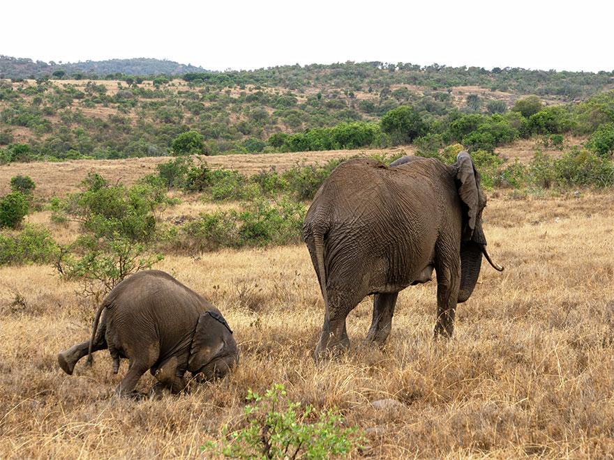 Позитивная галерея: 40 фото сконкурса насамый смешной снимок дикой природы   Канобу - Изображение 3986