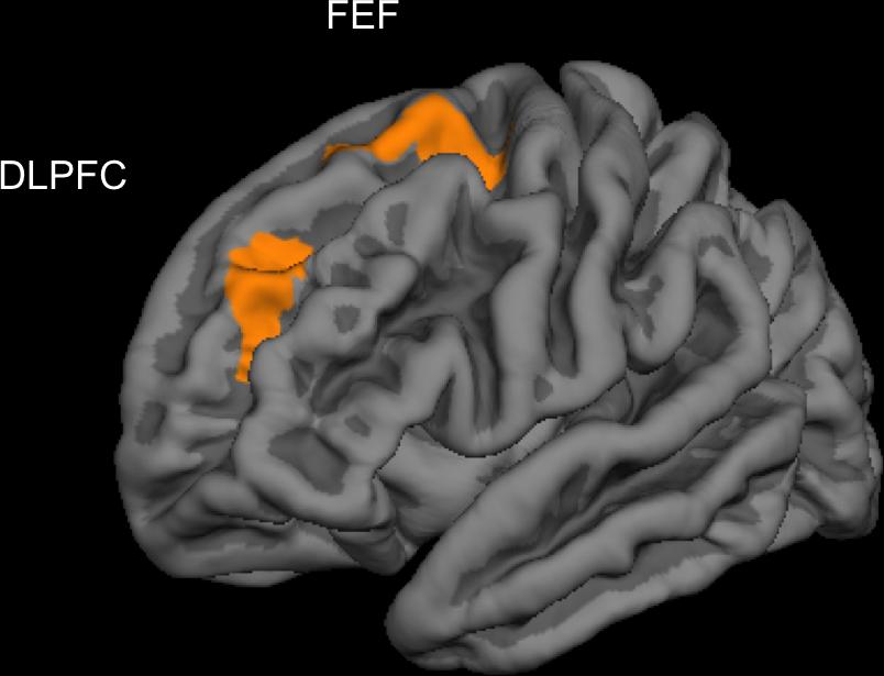 Видеоигры могут развить кору головного мозга    Канобу - Изображение 7660