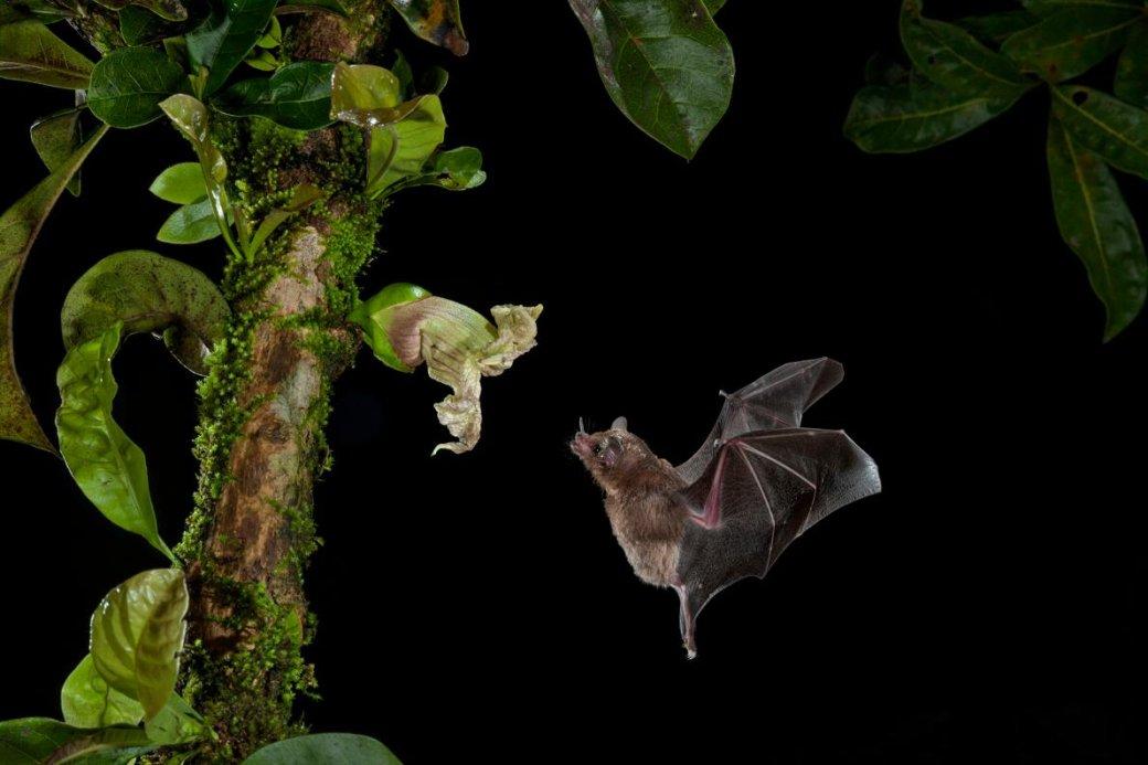 Хэллоуин еще некончился: лучшие фотографии летучих мышей отNatGeo | Канобу - Изображение 4696